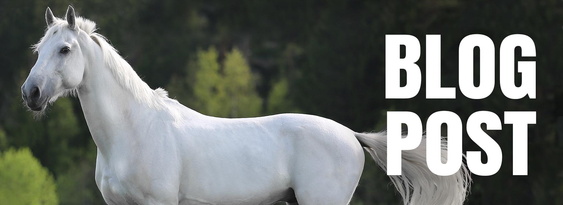 Blog - Comment entretenir la robe d'un cheval gris ?