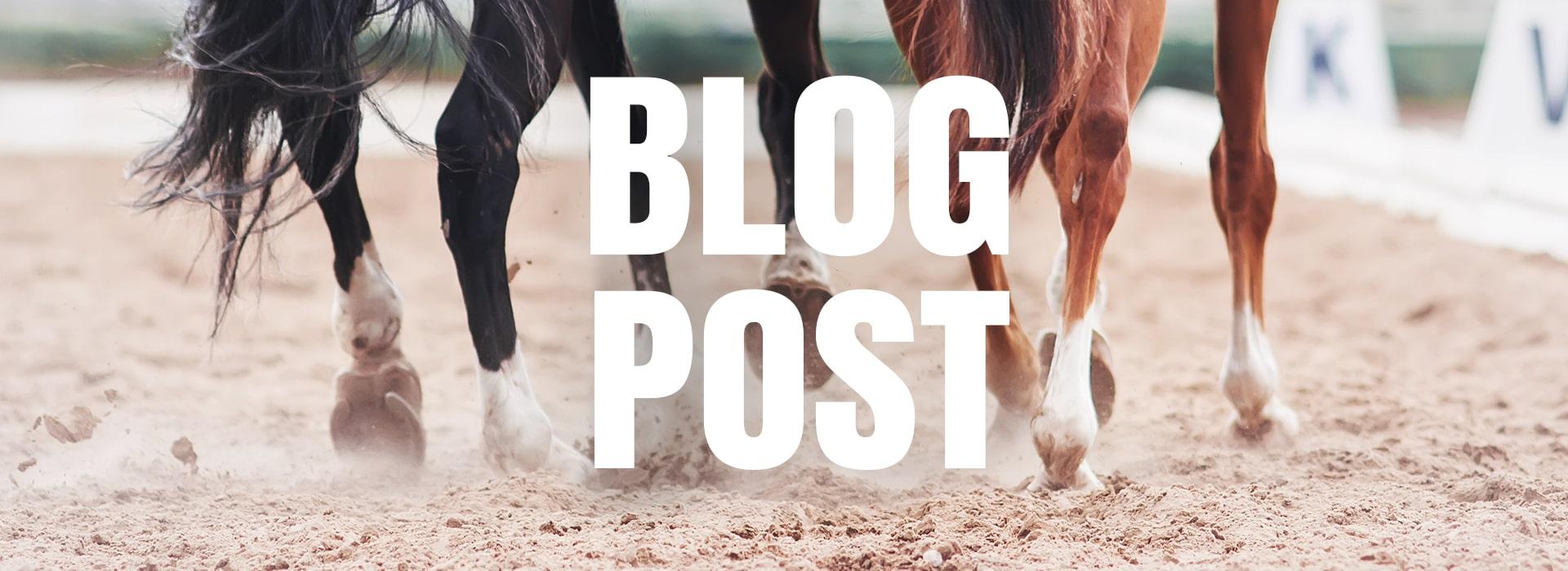 Blog - Comment entretenir les sabots d'un cheval ?