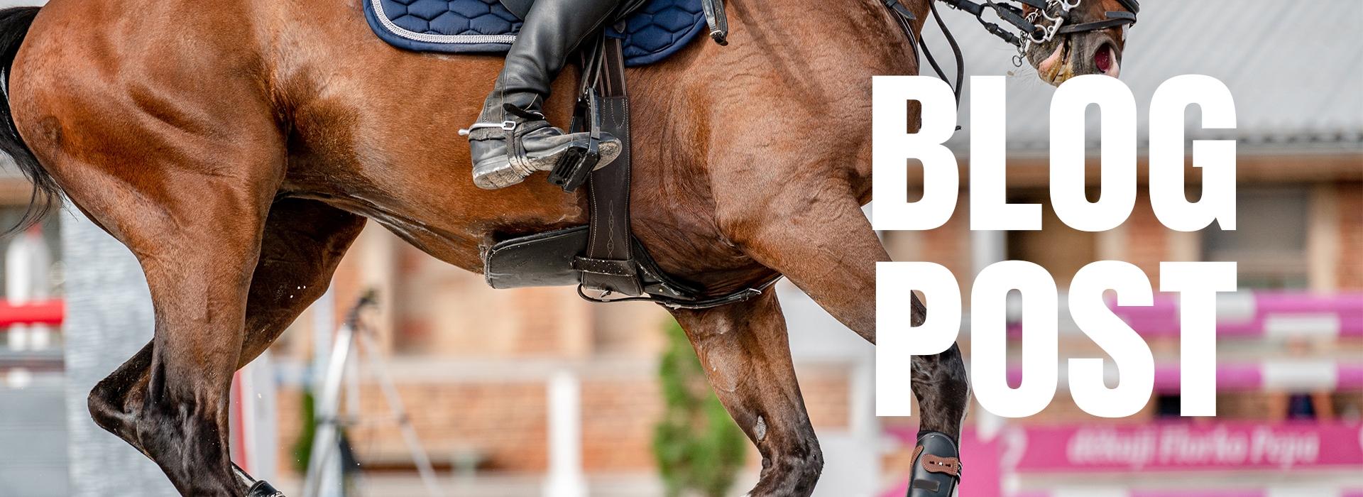 Blog - Comment traiter l'arthrose chez le cheval ?