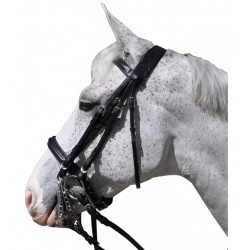 Hagen Bridle Flags and Cup