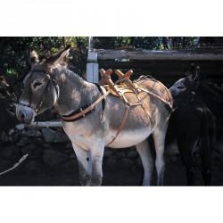 Albarda de madera cruzada para burros