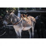 Bât bois à croisillons pour âne
