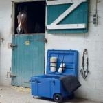 Malle horizontale La Gée pour chevaux de selle premium Grenat