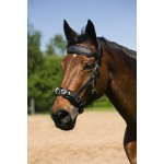 NORTON Neoprene lined lunging cavesson
