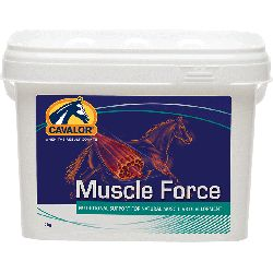 MUSCLE FORCE