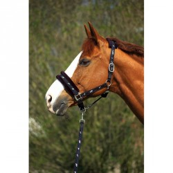 Norton Synthetic fleece lined nylon headcollar + rope set Black