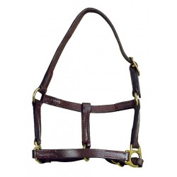Apollo Foal headcollar Havana brown