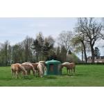 Ratelier à foin dans le pré avec chevaux
