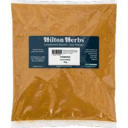Curcuma Hilton Herbs