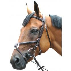 Privilege Equitation Royan C Bridle