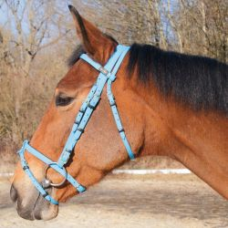Biotack bridle Light blue