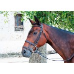 T de T Double Noseband Dark havana brown