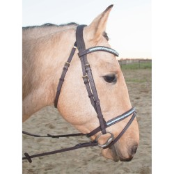 T de T Guardi bridle Dark havana brown
