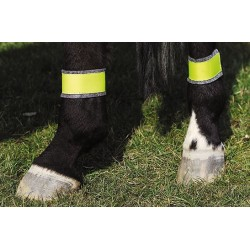 Yellow bandages for hindlegs