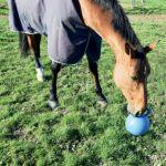 Jouet Fun Ball La Gee bleu avec cheval