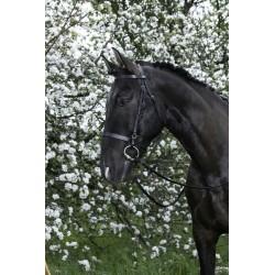Bridon Riding World Muserolle française Noir
