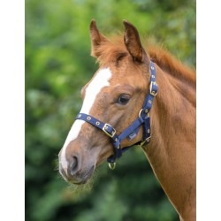 Licol foal Shires