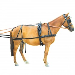 Chetak Continental Harness