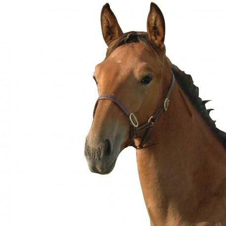 Norton Draught Horse Headcollar