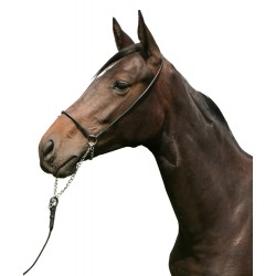 Pfiff in-hand bridle