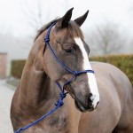 CASPAR HALTER WITH LEAD