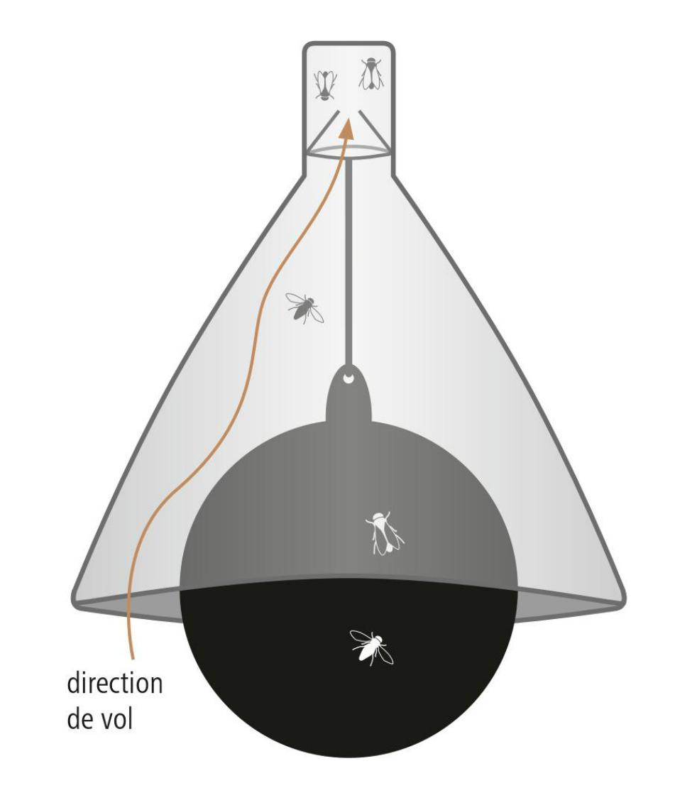 Schéma technique du piège à Taon